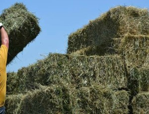 Stacking barrels of hay, image for Kenny Rogers music video script