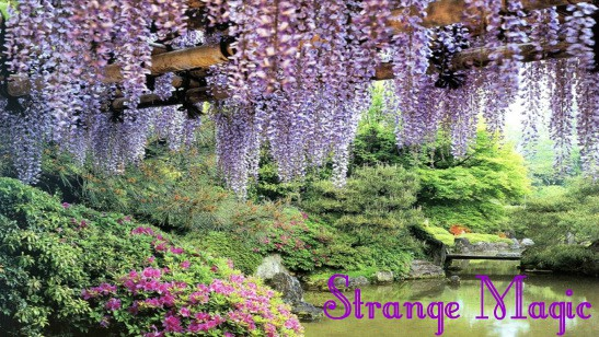 Magical garden, image for song Strange Magic by Darren Hayes, music video script by The Flash Fiction Ponder.